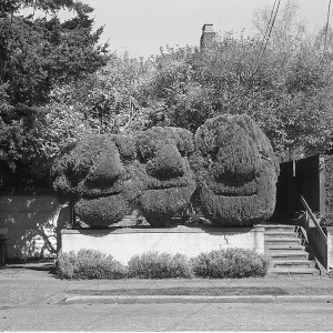 hedge faces