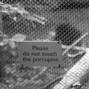 """""""please do not touch the procupine"""""""
