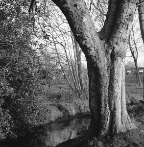 Trees and stream in urban park