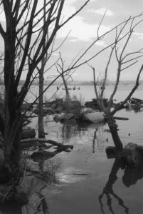 Potomac River, winter
